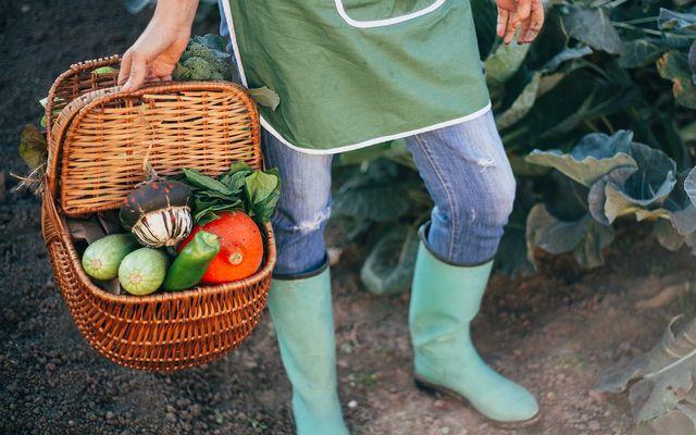 Gardener cost