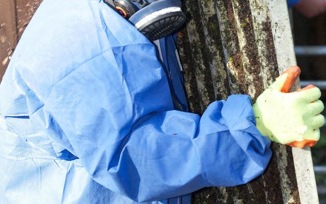 Asbestos removal cost