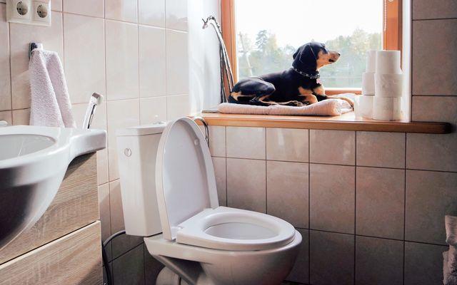 Toilet repair cost
