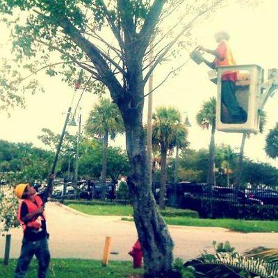 Big Dawg's Tree Service Miami, FL Thumbtack