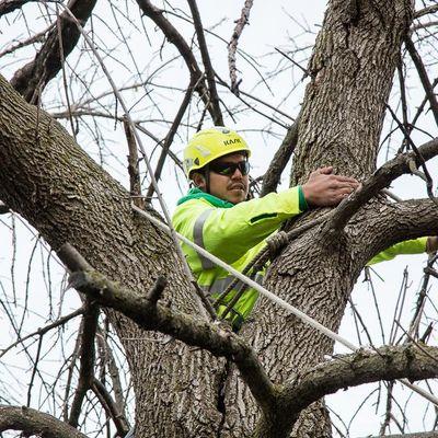 Precise Tree Care, Inc. Frankfort, IL Thumbtack