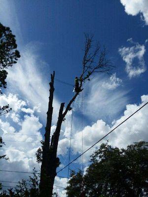 Classic Cuts Tree Service. Dunnellon, FL Thumbtack