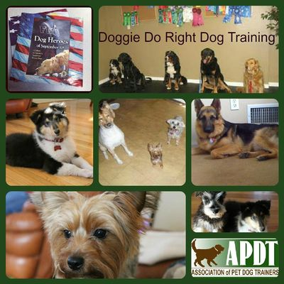 Doggie Do Right Dog Training Port Jefferson Station, NY Thumbtack