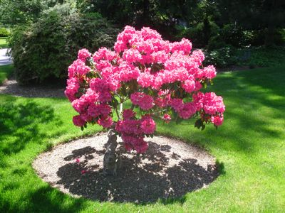 Paradise Pruning Specialists Wyandanch, NY Thumbtack