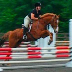 Amiable Horsemanship Wylie, TX Thumbtack