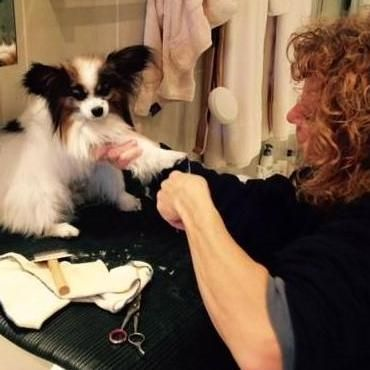 Nancy's Shaggy to Chic Mobile Dog Grooming Yorktown Heights, NY Thumbtack