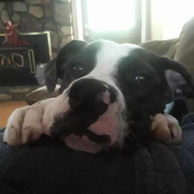 Peyton's Pet Care Pinson, AL Thumbtack