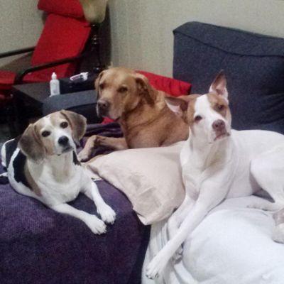 Best Behaved Pups Jacksonville, FL Thumbtack