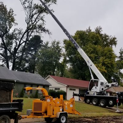 world Tree services Memphis, TN Thumbtack
