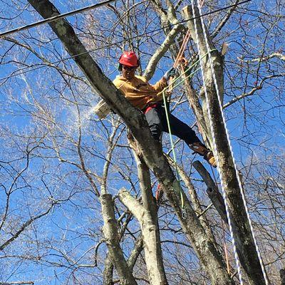 Mauricio's Tree Service Peekskill, NY Thumbtack