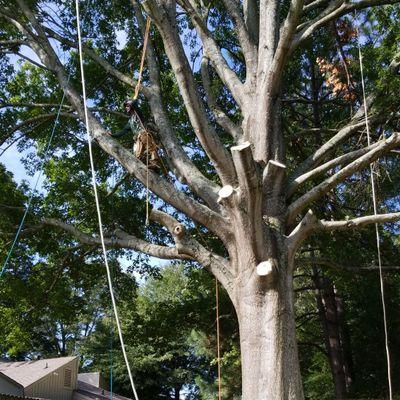 Tree services of shelby. Memphis, TN Thumbtack