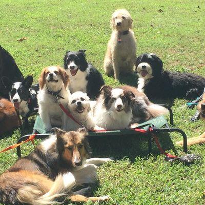 Hornbaker Dog Training Catharpin, VA Thumbtack