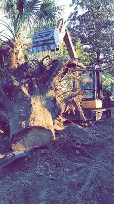 Precision Cuts Tree Specialists LLC Hilliard, FL Thumbtack
