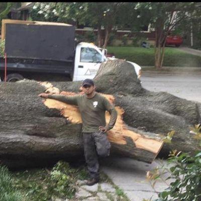 EFG professional Tree service Memphis, TN Thumbtack