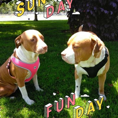 ***HAPPY TAILS TO YOU *** Roseville, CA Thumbtack