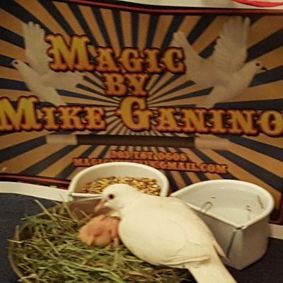 Magic For Every Occasion Bridgeport, CT Thumbtack