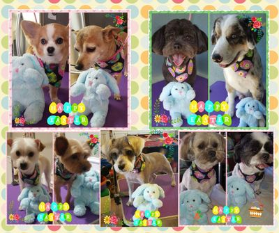 Michie's Pampered Pets House Call Grooming Calimesa, CA Thumbtack
