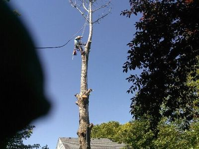 A&B Tree Services Inc. Naperville, IL Thumbtack