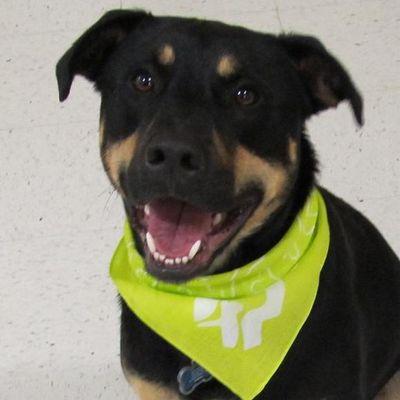 Rocky Junior's Dog Training Service Tacoma, WA Thumbtack