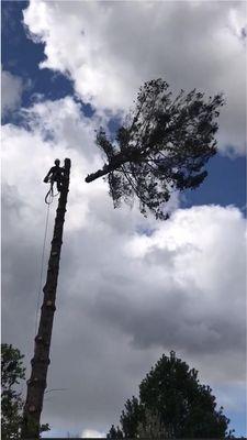 H&N Tree Service Prosser, WA Thumbtack