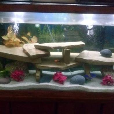 Nic's Fish And More Missouri City, TX Thumbtack