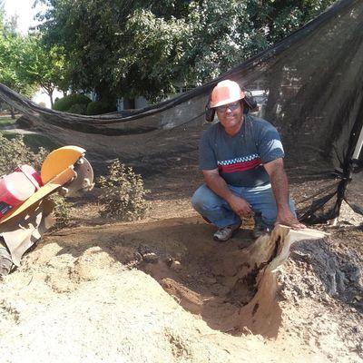 Chris Bean the Stump Grinding Guy Elk Grove, CA Thumbtack