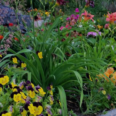 TLC Home and Gardens LLC Forest Lake, MN Thumbtack