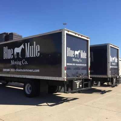 Blue Mule Movers Dallas, TX Thumbtack