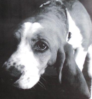 Work Dog Roanoke, VA Thumbtack