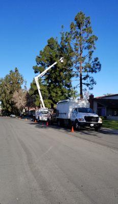 Treewest Co. Anaheim, CA Thumbtack