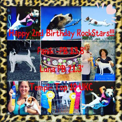 Independent Dog Sports Training, walking, daycare, boarding Ceres, CA Thumbtack