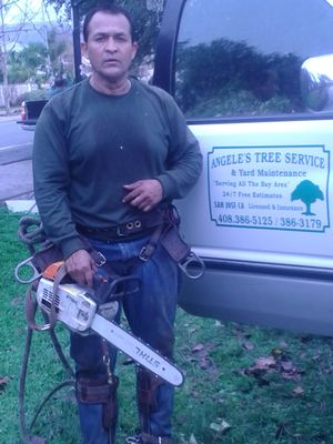 Angele's Tree Service San Jose, CA Thumbtack
