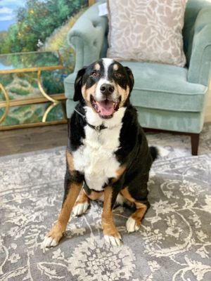 Loudoun Pet Care Ashburn, VA Thumbtack