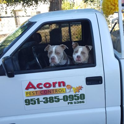Acorn Pest Control Hemet, CA Thumbtack