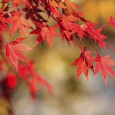 Red Falls Landscape Designs LLC Manassas, VA Thumbtack