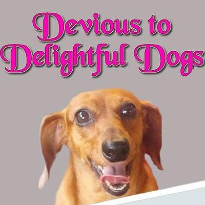 Devious to Delightful Dog Training Brookfield, IL Thumbtack