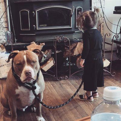 Worlds greatest dog trainer East Providence, RI Thumbtack