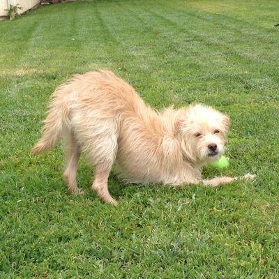 Got Dogs Get Training Apple Valley, CA Thumbtack
