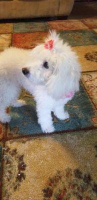 A & G Pet Grooming  LLC Vail, AZ Thumbtack