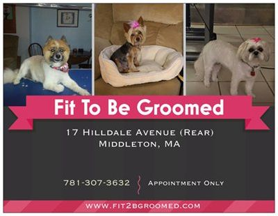 Fit To Be Groomed Middleton, MA Thumbtack