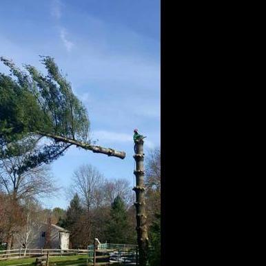 1st Choice Tree & Landscaping Church Hill, TN Thumbtack