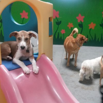 FREEPLAY DOGS Doggy Daycare, Cageless Dog Boarding, Dog Grooming, Indoor Dog Park Concord, CA Thumbtack
