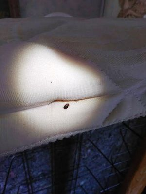 Indy Bed Bug Professionals Indianapolis, IN Thumbtack