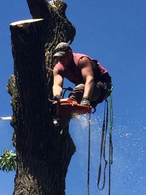 Spartan Tree Care Sauk Centre, MN Thumbtack