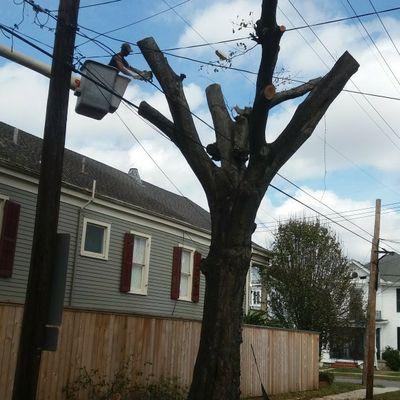 Reliable Tree Service New Orleans, LA Thumbtack