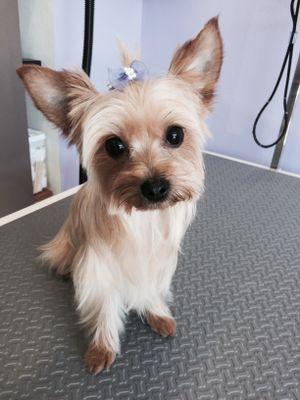 Loving Paws Dog Grooming Winchester, CA Thumbtack