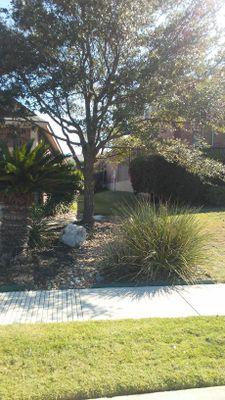 THE GREAT TREE San Antonio, TX Thumbtack