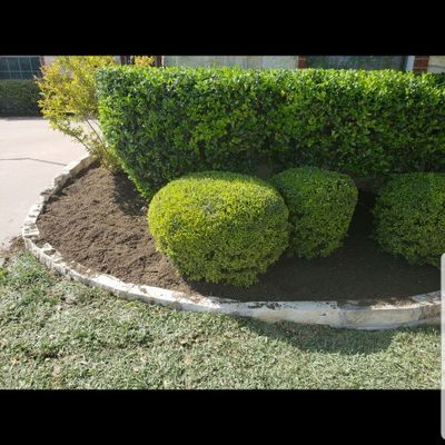 Vasquez Lawn Service LLC Plano, TX Thumbtack