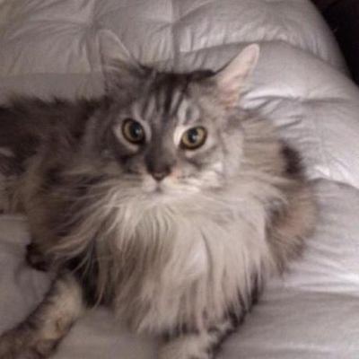 Your Cat Concierge Alexandria, VA Thumbtack