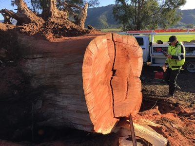 Laan's Tree Care Ramona, CA Thumbtack